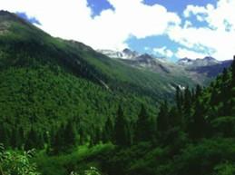 Sichuan forest